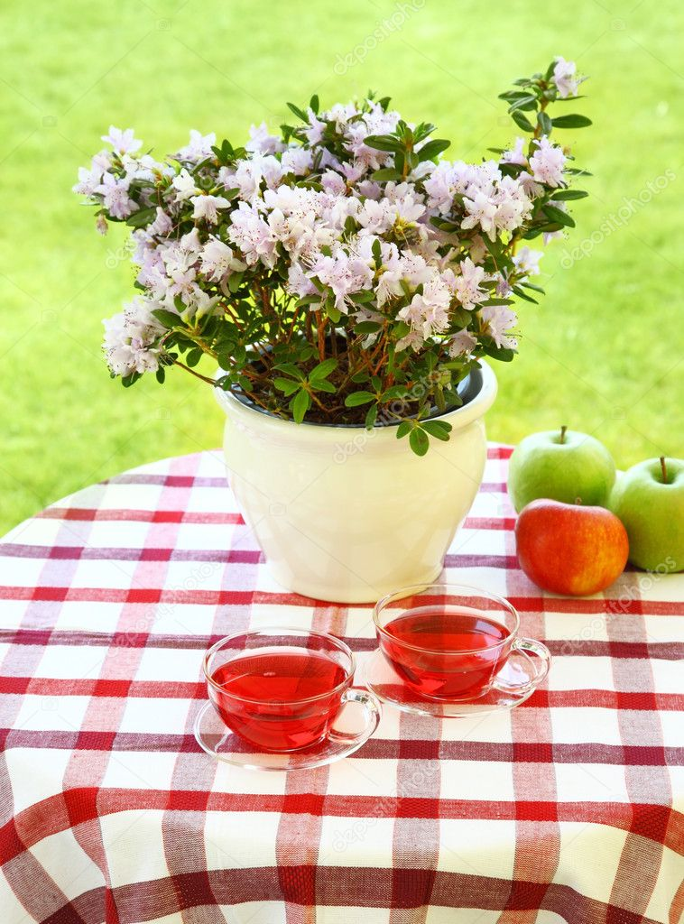 Two cups of tea served in the garden  Stock Photo #9384165