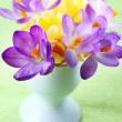 Beautiful Crocuses for Easter — Stock Photo #9448496