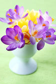 Beautiful Crocuses for Easter — Stock Photo