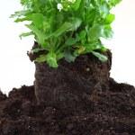 Planting — Stock Photo #9606974