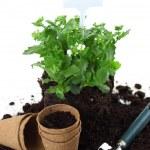 Planting — Stock Photo #9607020