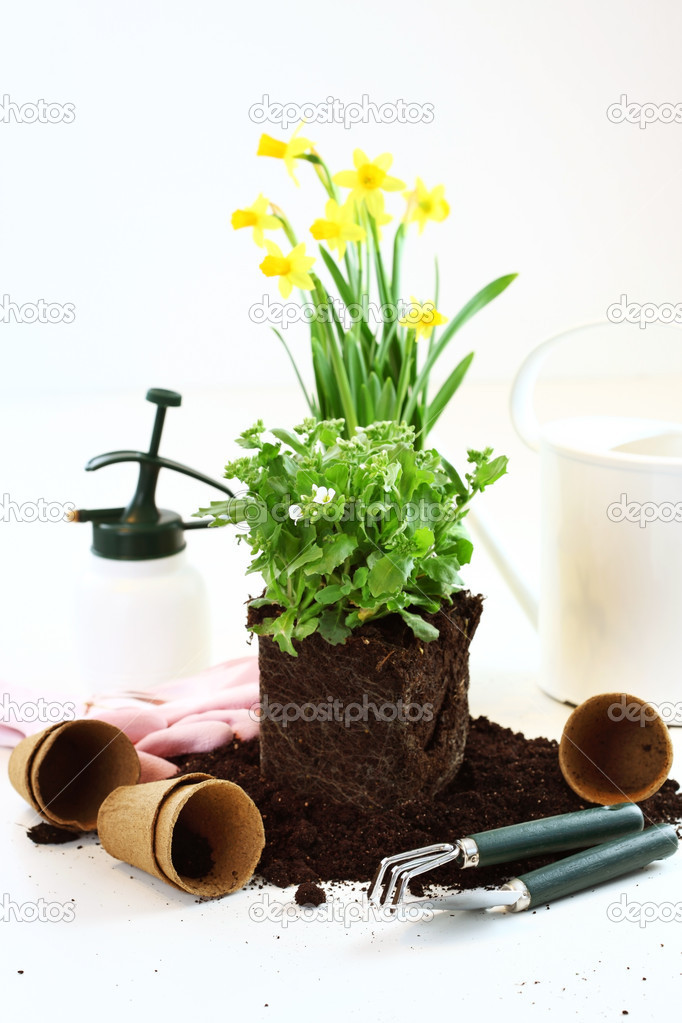 Decorative plant ready for planting on the garden — Stock Photo #9606938