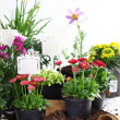 Stock Photo: Decorative flowers and vegetable ready for planting