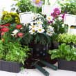Decorative flowers and vegetable ready for planting - Stock Photo