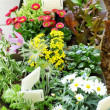 Decorative flowers and vegetable ready for planting — Stock Photo