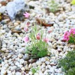 Rockery — Stock Photo