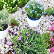Rockery — Stock Photo #9866820