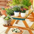 Stock Photo: Flower pots