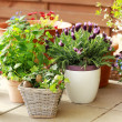 Flower pots — Stock Photo #9866977