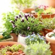 Flower pots — Stock Photo #9867090