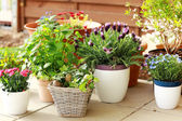 Flower pots — Stock Photo