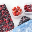 Plastic containers of frozen mixed berries in snow - red currant, cranberry — Stock Photo