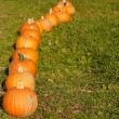 Row of pumpkins - Stock Photo