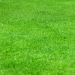 Evenly green grass - Stock Photo