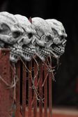Skulls on a fence — Stock Photo