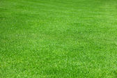 Evenly green grass — Stock Photo