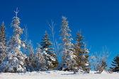 Sonnige winterszene — Stockfoto