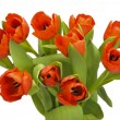 Bunch tulips — Stock Photo