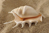 Shell on sand — Stock fotografie