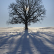 Single oak tree — Stock Photo #9346604