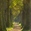 Tree alley - Stock Photo