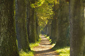Tree alley — Foto Stock