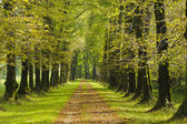 Tree alley — Stockfoto