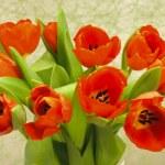Bunch of tulips — Stock Photo