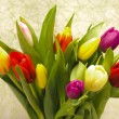 Easter tulips — Stock Photo