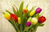 Velikonoční tulipány — Stock fotografie