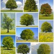 Big trees — Stock Photo