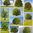 Stock Photo: Big trees