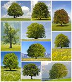 Velké stromy — Stock fotografie