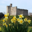 Cardiff Castle, in Wales, behind Daffodils, the Welsh national flower - 图库照片