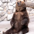 Brown bear is sitting — Stock Photo #8368780