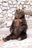 Brown bear is sitting — Stock Photo