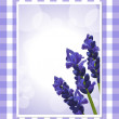 Stock Vector: Lavender on gingham background