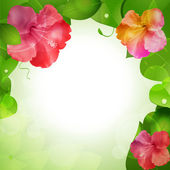 Hibiscus flower border background — Stock Vector