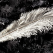 White ostrich feather — Stock fotografie