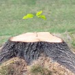 Stock Photo: Defiant tree stump