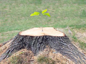 Defiant tree stump — Stock Photo
