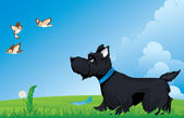 Scottish terrier — Stock Vector