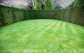 Trimmed hedge around oval lawn — Stock Photo