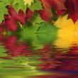 Autumn leaves in water with reflection — Stock Photo