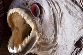 Piranha fish close up — Stock Photo