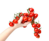 Bunch cherry tomatoes in hand — Stock Photo