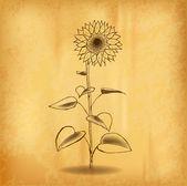 Sun flower — Stock Vector