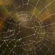 Stock Photo: Cobweb with glistening dewdrops