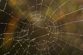 Cobweb with glistening dewdrops — Stock Photo
