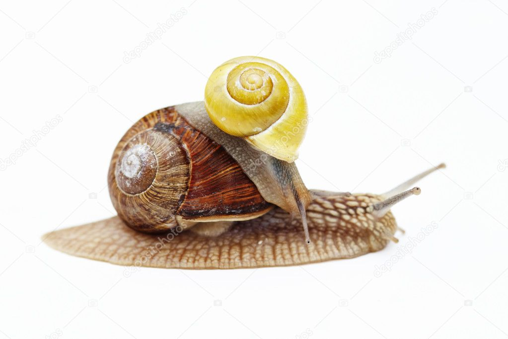 Shot of the big and small snail - cargo - truck — Stock Photo #8049393